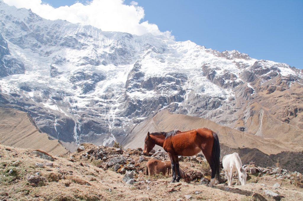 trek du salkantay Pérou