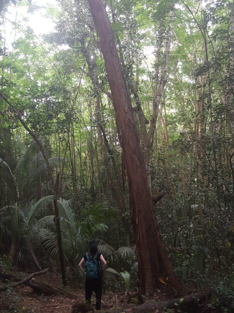 Trek Seychelles